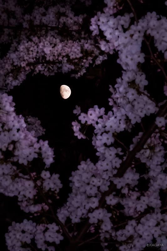 Mặt Trăng tối bữa nay, ngày 30 tháng 3 năm 2015, tức là ngày 11 tháng Hai năm Ất Mùi trên bầu trời Tōkyō, nước Nhựt Bổn. Tác giả hình : Họa sĩ Kagaya Yutaka.