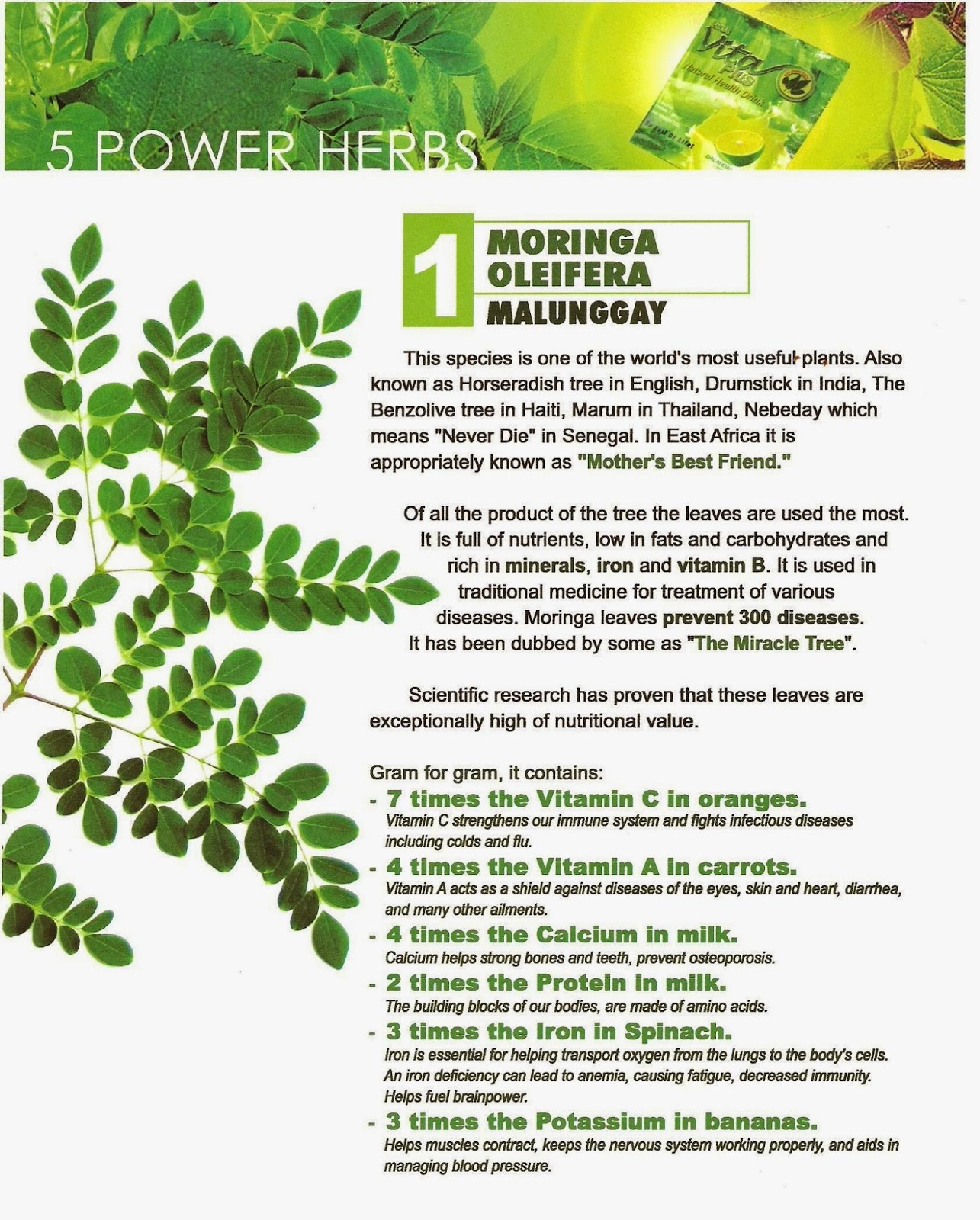 utilization moringa oleifera malunggay Moringa seed oil is an outstanding source of vitamins and minerals for utilization of the  have found that malunggay or moringa oleifera leaves contain.