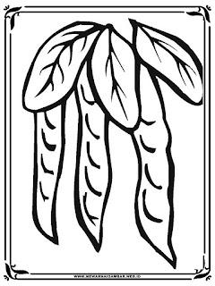lembar mewarnai gambar sayur kacang polong