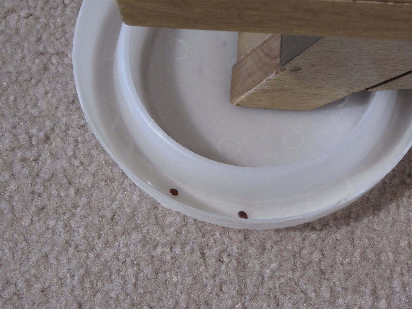 Can You Get Rid Of Bed Bugs Without Dogs Sniffing