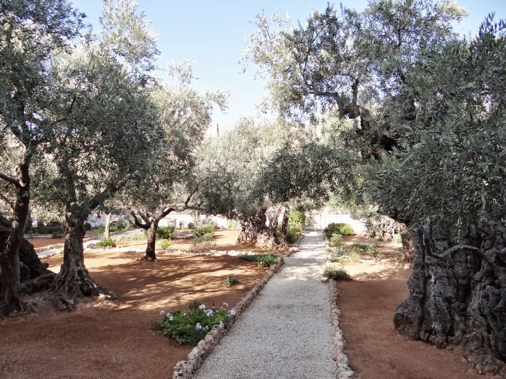 Ogród Oliwny w Jerozolimie