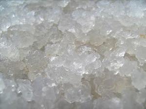 crystal algae jepang
