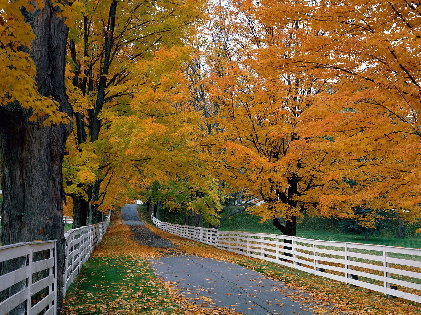 The best top autumn desktop wallpapers 17 En Güzel Sonbahar HD Duvar Kağıtları