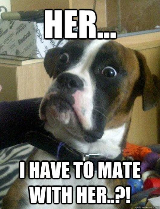 dog meme, baffled boxer, baffled boxer meme, baffled boxer meme pictures, funny meme, funny meme pictures