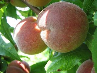 masker buah persik