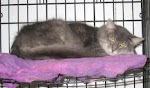 3/5/12 Durbin WV Animal Shelter Dogs Cats in Need