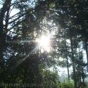 Link to: Siberian Summer Sun
