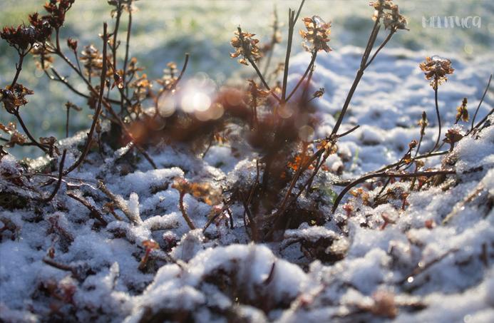 Nieve en Belfast