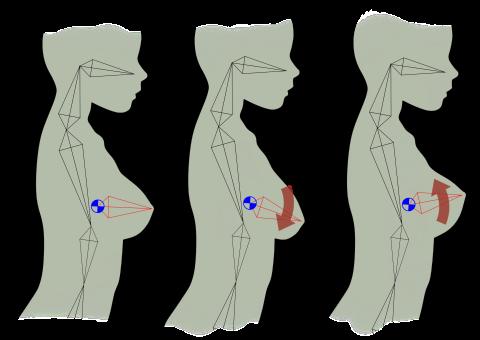 バストのボーン模式図