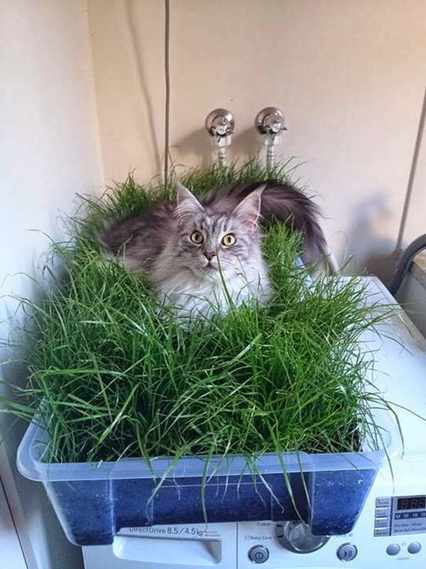 Funny cats - part 94 (40 pics + 10 gifs), cat pictures, cat sits on grass