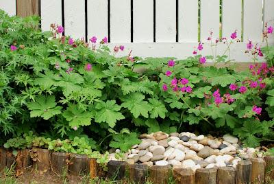 Tuoksukurjenpolven kukat, kaukasianmaksaruoho ja suihkulähde