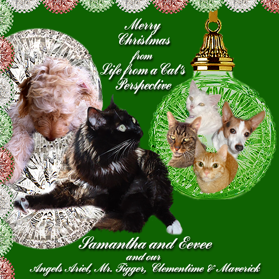 Our Christmas Card To Our Furiends