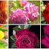 Bonitas imágenes animadas de flores y rosas, comparte y regalas rosas animadas gratis