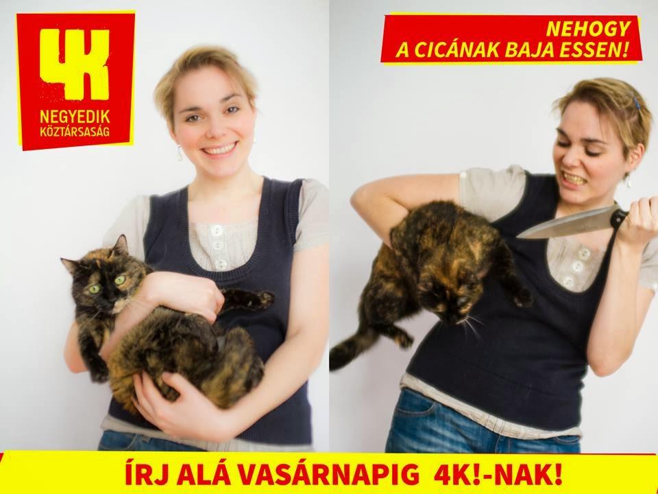 4K, Papp Réka Kinga, macska, cica