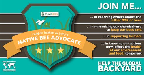 Become a Native Bee Advocate