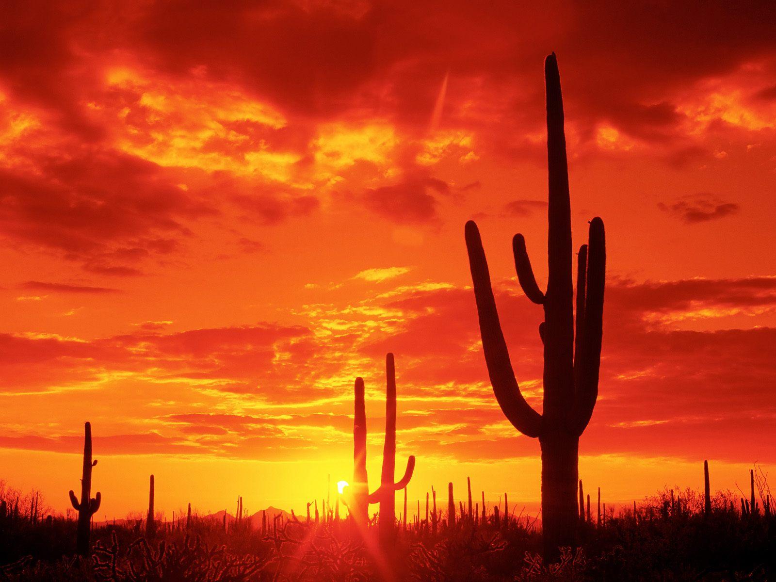 http://2.bp.blogspot.com/-_JplQ-_FBKs/T2zqwEqZoHI/AAAAAAAAD1c/_zVUuvdfEsU/s1600/Burning-Sunset-Saguaro-National-Park-Arizona.jpg