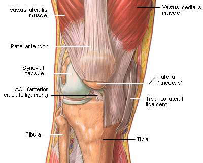 Medial Knee Pain