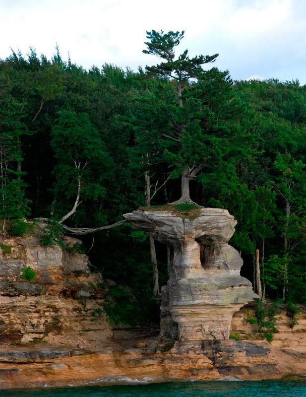 The Lucky Tree of Chapel Rock