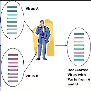 virus combination (reassortment) -- Avian Flu Diary blog