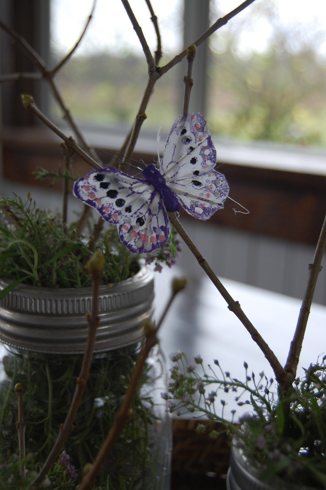 Little Toewsies: Butterfly Party