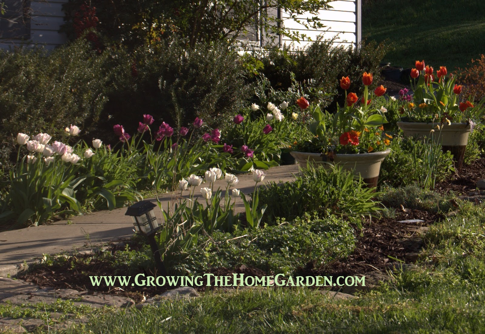 Planting A Tulip Garden in Spring - Growing The Home Garden