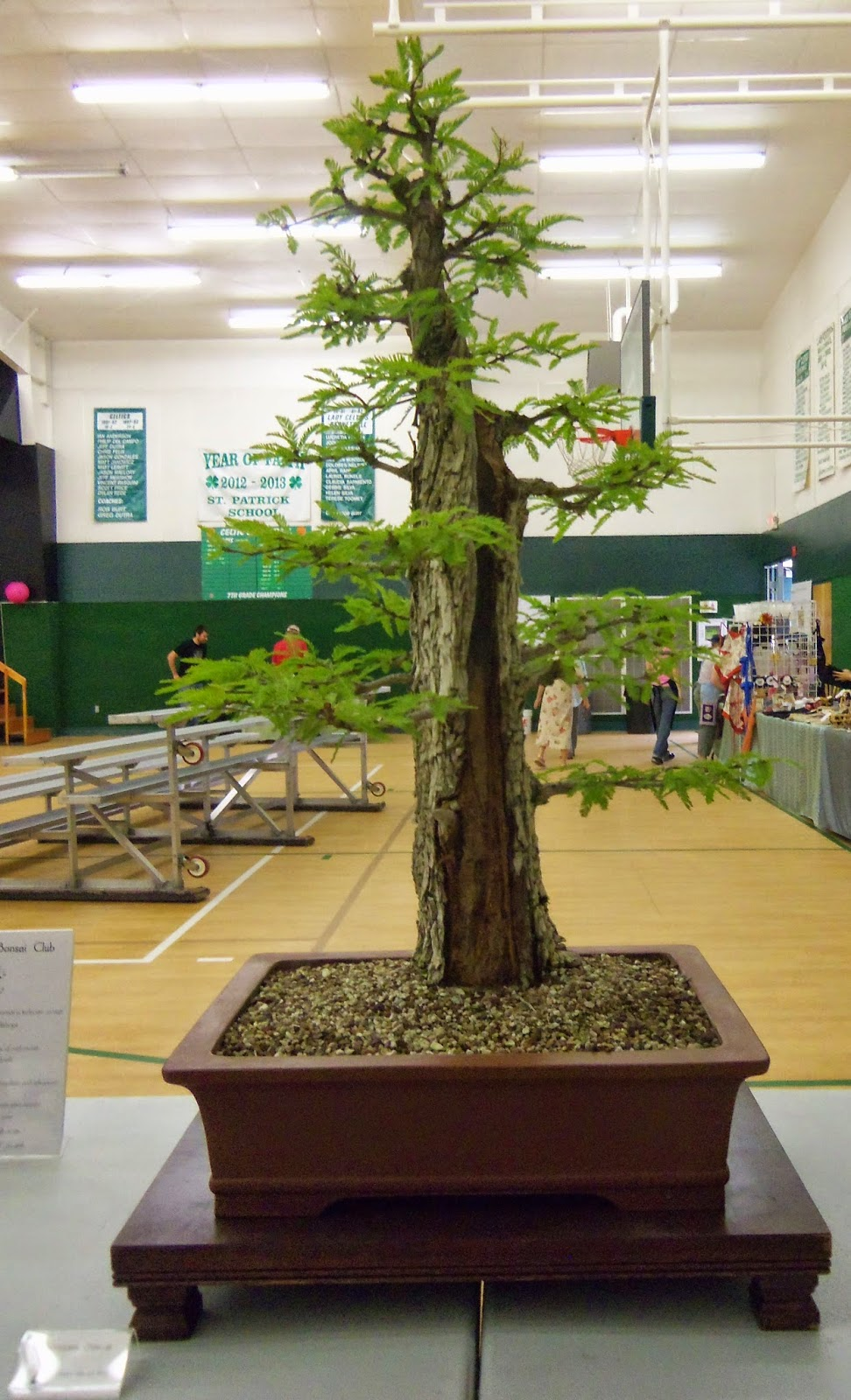 Santa Maria Bonsai Club San Luis Obispo Obon Festival August 2nd