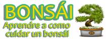 Como cuidar un bonsai - Consejos , Imagenes , Videos