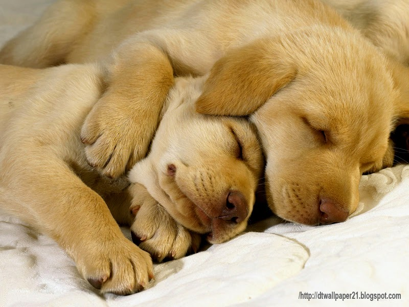 Cute Dogs Puppy Background Wallpapers