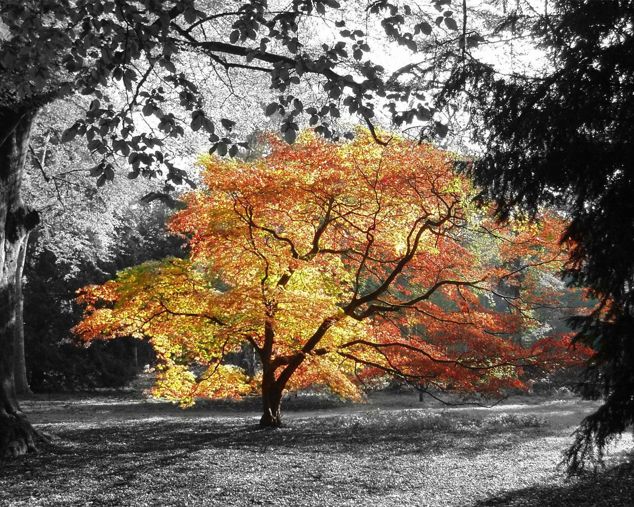 Desktop HD Autumn Wallpapers   HDIMAGESPLUS