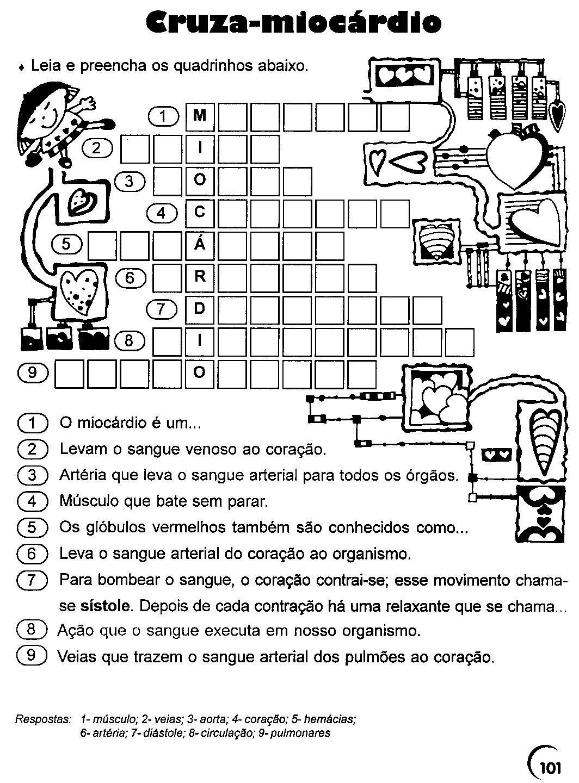 Excepcional Sistema Cardiovascular | Rede Rio Grande do Norte KP34