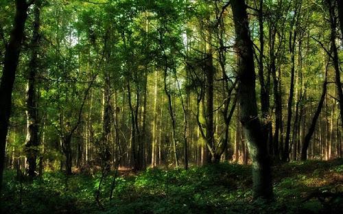 Foto-Foto Hutan Ukuran Besar