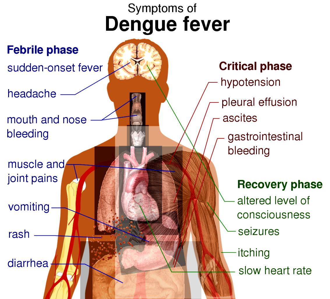 has fever: