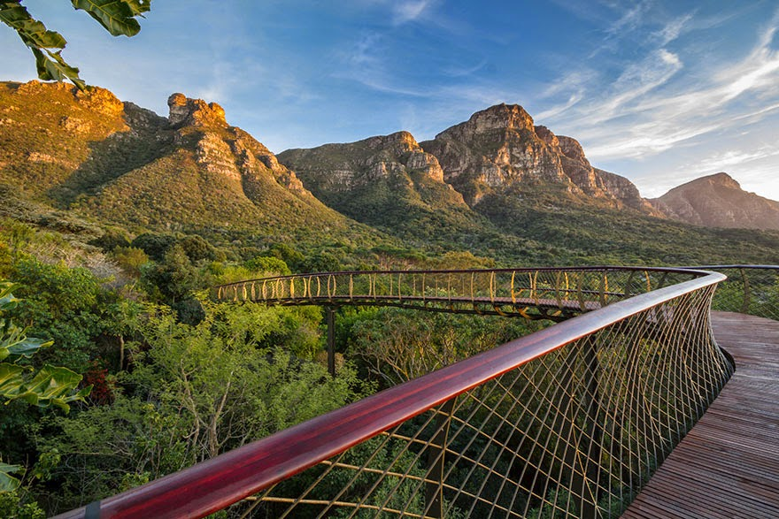 Kirstenbosch Centenary Tree Canopy walkway-5