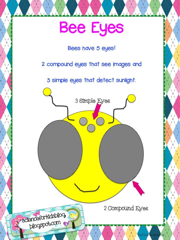 honey bee worksheet for kindergarten honey best free printable worksheets. Black Bedroom Furniture Sets. Home Design Ideas