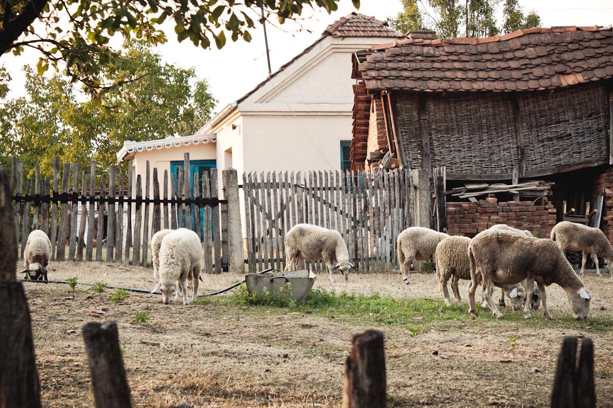 Lipnica,Srbia