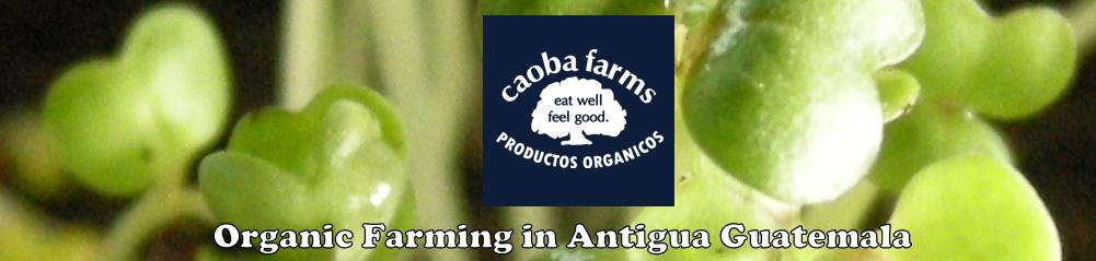Caoba Farms - Organic Farming in Antigua Guatemala