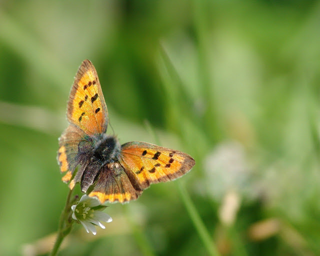 Mariposas en la Naturaleza