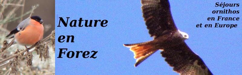 Nature en Forez
