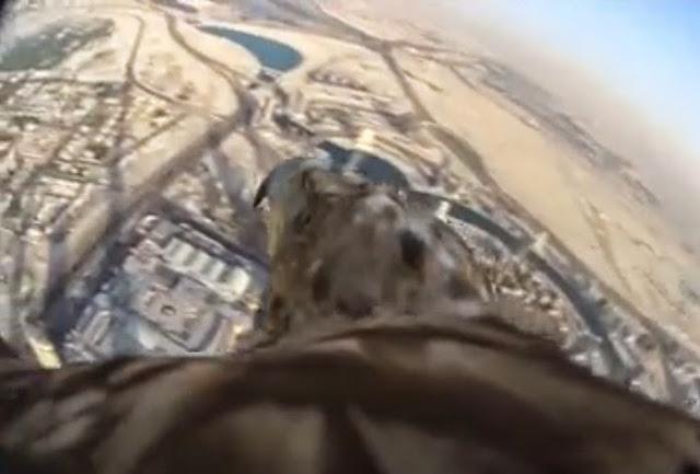 darshan elang imperial pemandangan menakjubkan burj khalifa