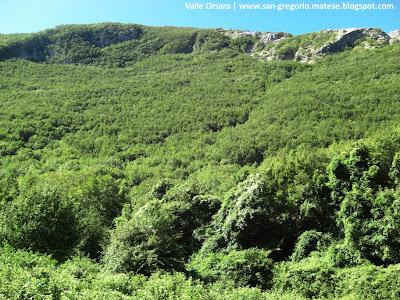Vegetazione a Valle Orsara