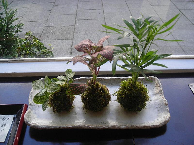 es de tres kokedamas o traducido bolas de musgos es una técnica