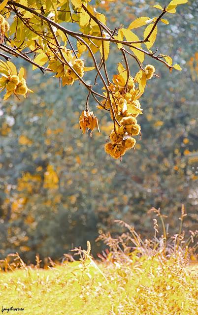 La foret en automne, Haute-Savoie