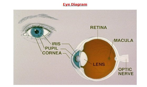 Human eye diagram and anatomy complete with images safe health tips eye diagram 3 ccuart Gallery