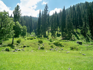 green hd Swat valley background wallpaper ajd 800px.jpg