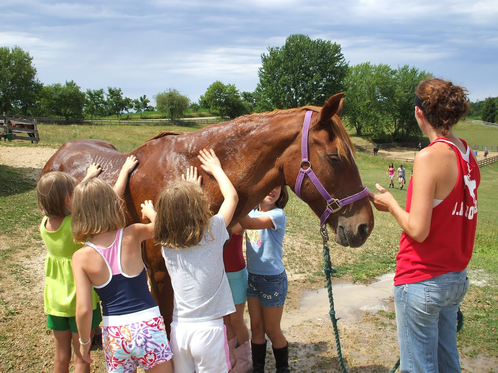 Hoofbeat Ridge Day Camp: Horse Bathing Pictures