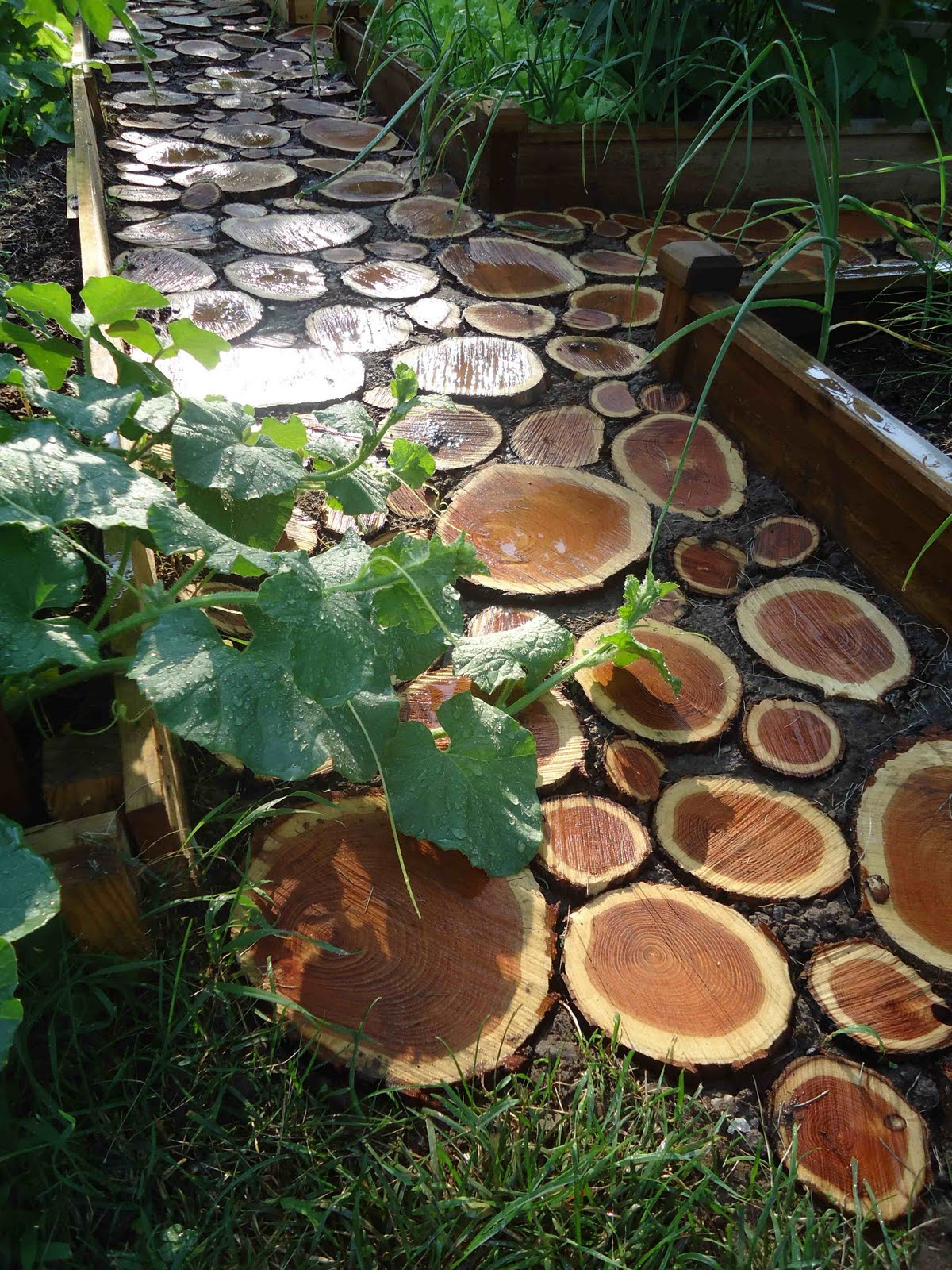 Landscaping With Wood Logs : But while we are waiting for that to grow it s still nice