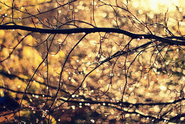 golden sunlight and sparkling branches with raindrops