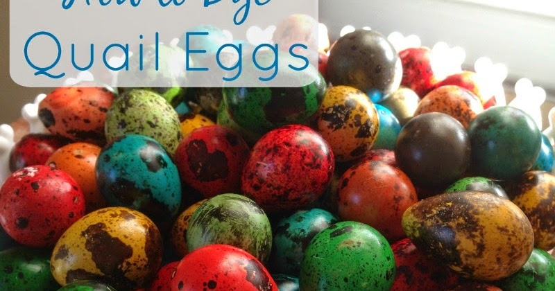 Linn Acres Farm: How to Dye Quail Eggs