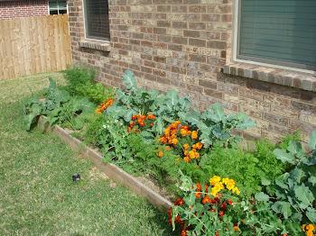 Polyculture Garden Fall 2011