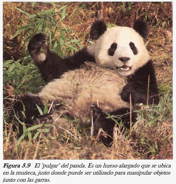 Detrás del Código: Pandas desconcertantes—William Dembski, Jonathan ...